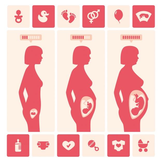 新生命的開始─懷孕歷程